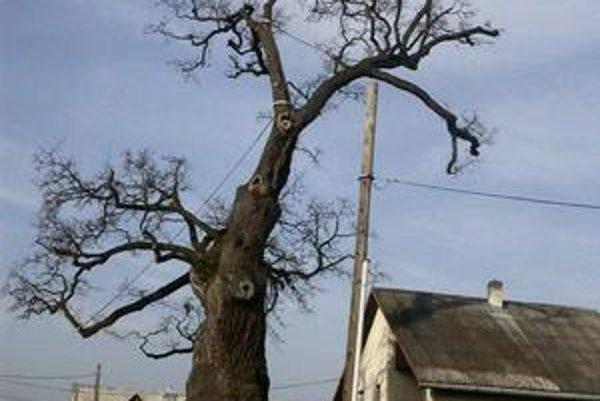 Letný dub v Dubinnom. Patrí medzi najstaršie stromy v strednej Európe.