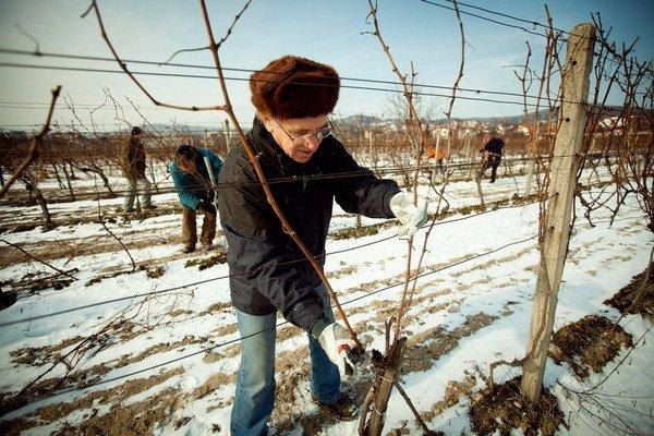 Bez súťaží budú môcť eurofondy utrácať najmä vinári, včelári či zeleninári.