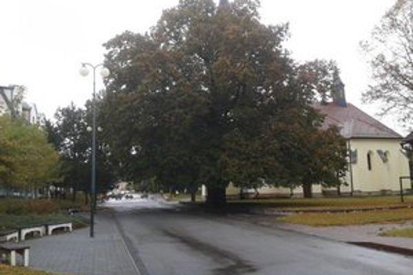 Lipa malolistá z Lipian. Uchádza sa o titul Európsky strom roka 2012.