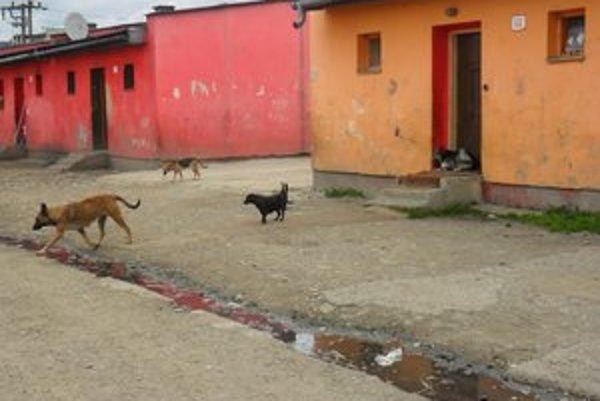 Psy v osade sa nekontrolovateľne sa množia.
