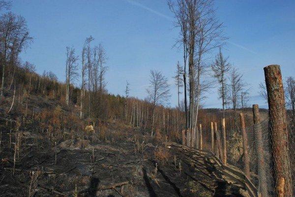 Zhorená časť lesa.