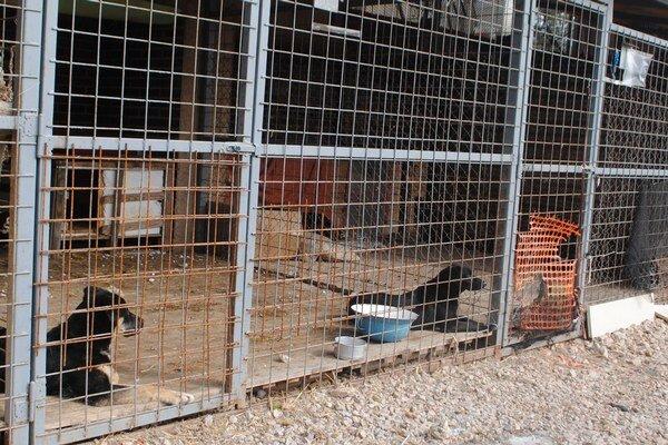 Psy v útulku. Čakajú na svoj nový domov.