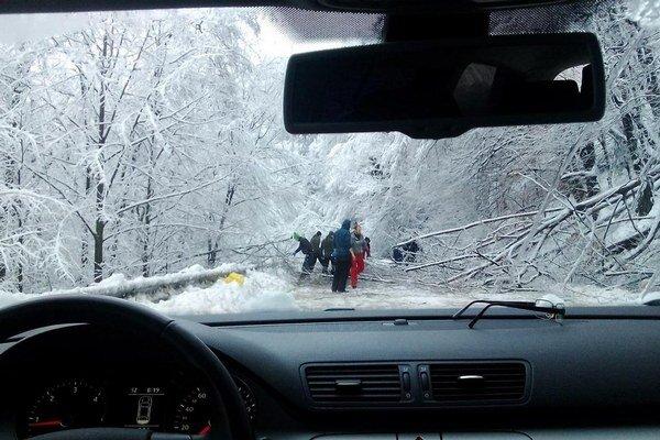 Stromy. Dovaj cestou na turnaj do Kežmarku došiel iba na Dobšinský kopec.