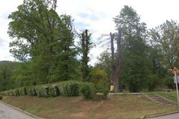Stromy v parku. Technické služby pristúpili k odstráneniu suchých konárov.
