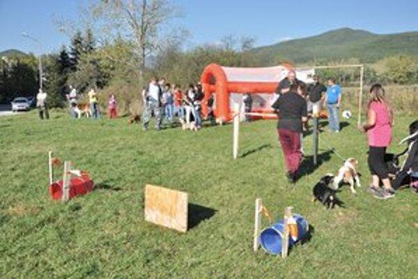 2. ročník amatérskych pretekov domácich mazňošov. Mestské psy ukázali, že sa vedia správať.