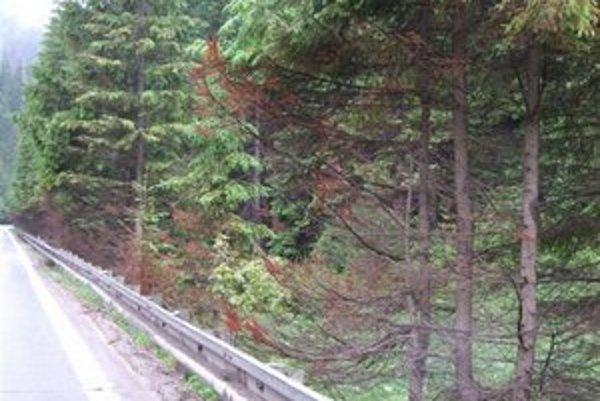 Zničené stromy. Ihličnany na Dobšinskom kopci sčerveneli a vyhynuli.