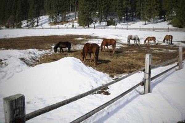 Ranč sa venuje chovu koní.