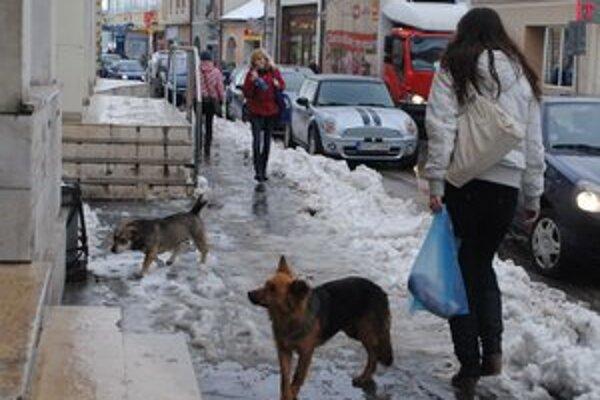 Psy v centre Rožňavy sú každodennou realitou.