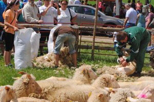 Strihanie oviec bolo magnetom pre návštevníkov.