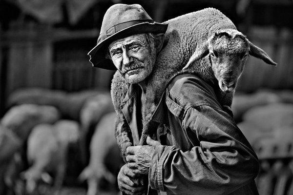 """Jedna z ocenených fotografií """"The III Lamb"""". Čestné uznanie získal za túto fotografiu Papp Elek z Maďarska."""