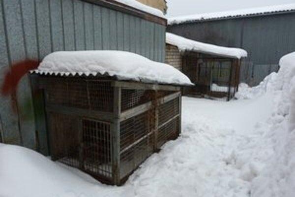 Zatúlaných psov svidnícki mestskí policajti umiestňujú do koterca zriadenom v dvore Technických služieb mesta. Radnica zvažuje na tento účel objednať externú firmu.