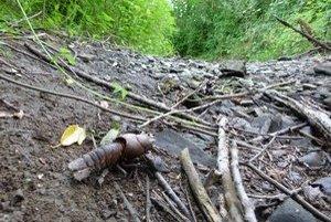 Potok Hrabovčík. Ešte pred pár týždňami tadiaľ tiekla voda. Desiatky rakov uhynuli na následky sucha.