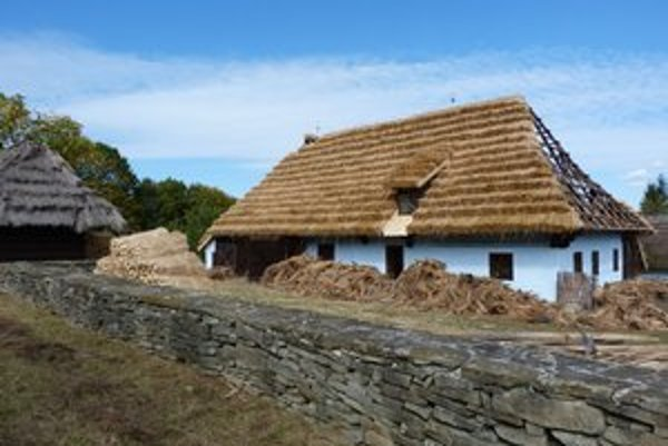 Skanzen vo Svidníku. Slamenú strešnú krytinu na plánovanú obnovu gazdovskej usadlosti bolo treba najskôr dopestovať.