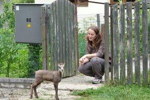 Kamzíčka Evička. V novom domove pri náhradnej mamke S. Mihucovej sa trojtýždňové mláďatko cíti bezpečne. Ráno a večer spolu chodia na prechádzky do lesa.