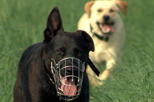 Začipovať všetkých psov je potrebné do konca septembraInak hrozí pokuta 370 eur.
