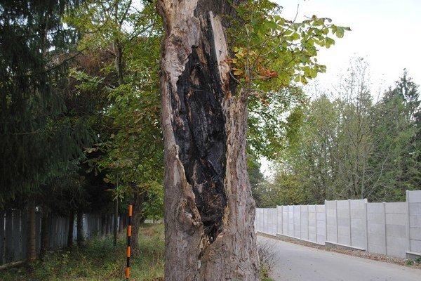 Strom na Hubkovej vyrúbu.