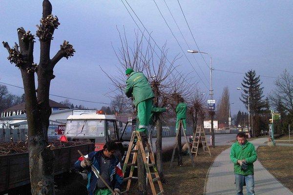 Orez stromov. Je súčasťou jarných prác vmeste.