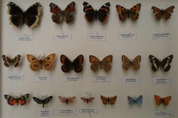 Preparáty zapožičalo Vihorlatské múzeum zo svojich zbierok.