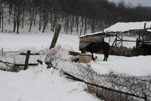 Hrušovčania tvrdia, že toto oplotenie kone bez problémov preskočia atúlajú sa potom po dedine. Majiteľa regionálni veterinári vyzvali, aby ho dal do poriadku.