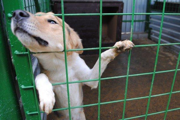 Adopcia psíkov. Michalovčania, ktorí si adoptujú psíka z mestského útulku, sú oslobodení od dane za psa. Ak bývajú v bytovke, ušetria ročne 35 eur, ak v dome, 10 eur.