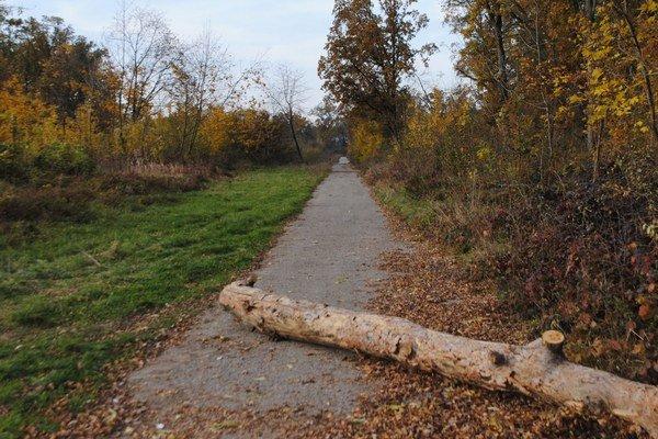 Miesto nálezu. Vážne zranený Michalovčan ležal nehybne na lesnej ceste v lesoparku Biela hora v Michalovciach. Zraneného našla 64-ročná žena, ktorá venčila svojho psíka.