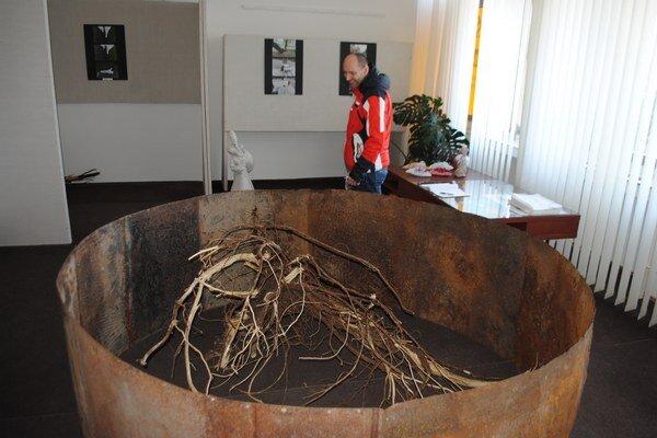 Naše korene. Zaujímavá priestorová inštalácia Zuzany Sotákovej v galérii MsKS púta pozornosť návštevníkov.