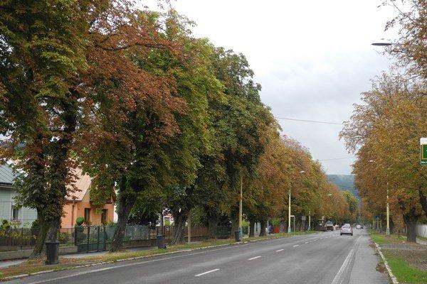 Gaštanová aleja v Strážskom.