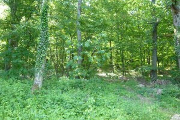 Listnaté lesy. Kliešte sa vyskytujú v lesoch pohoria Vihorlat. Či už v okolí Sninských rybníkov alebo pozdĺž Zemplínskej šíravy.