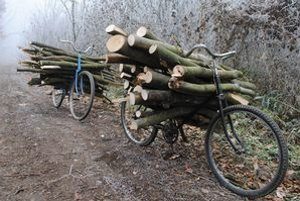 Cykloturistika za drevom. Rómovia odnášajú drevo z lesa húfne na bicykloch, kárach a v detských kočíkoch.