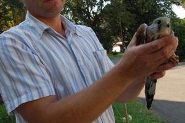Má zranené krídlo a nedokáže lietať. Zoológ Tibor Vongrey verí, že bude v poriadku.