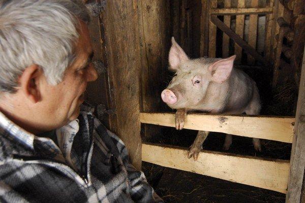 Pre chov hospodárskych zvierat platia nové praviidlá.