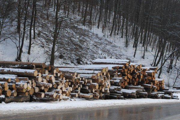 Ťažobná činnosť. V Lesoch mesta sa rozbehne v najbližších dňoch.