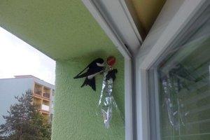 Lastovičky aj belorítky si zvyknú stavať hniezda na oknách.