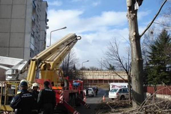 Zapálený aktivista. Strom chránil vlastným telom.