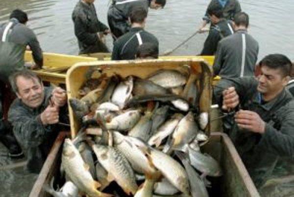 Väzni z Košíc - Šace pomáhali aj v minulosti pri výlove rýb v Períne.