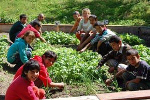 Malí pestovatelia. Políčka majú títo školáci vo vzornom stave, zeleninu by im závidel nejeden záhradkár.