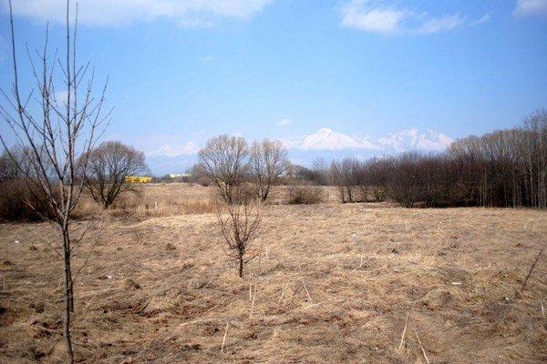 Popradské rašelinisko je lokalitou mnohých vzácnych rastlín.