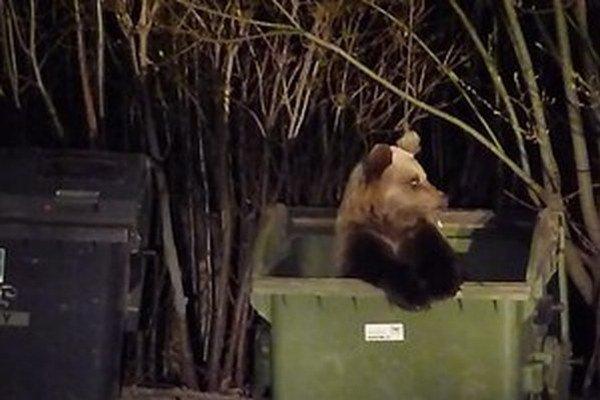 Tatranským problémom sú medvede, ktoré schádzajú do obytných zón ku kontajnerom.