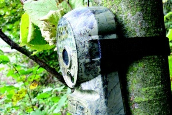 Fotopasca. Špeciálne zariadenie, ktoré odfotografuje zver alebo narušiteľa aj v noci.