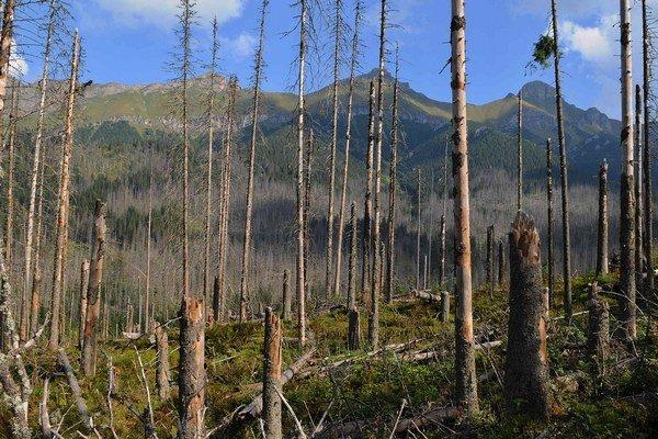 Zničený les v Javorovej doline.