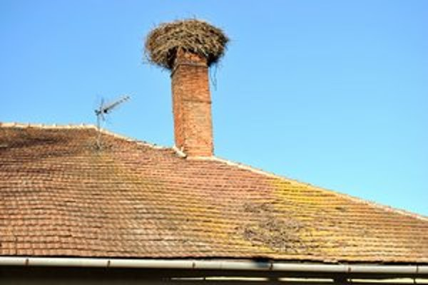 Starý domov. Takto špinilo staré hniezdo strechu, ktorá volá po oprave.