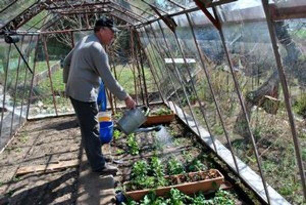"""Juraj Slavkovský v skleníku. """"Zelenine sa tam darí,"""" tvrdí záhradkár."""