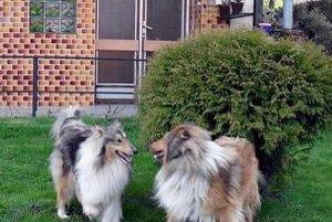 Sučka so psom. Spolu si užili dva dni, potom majiteľom z Novej Ľubovne psík zmizol.