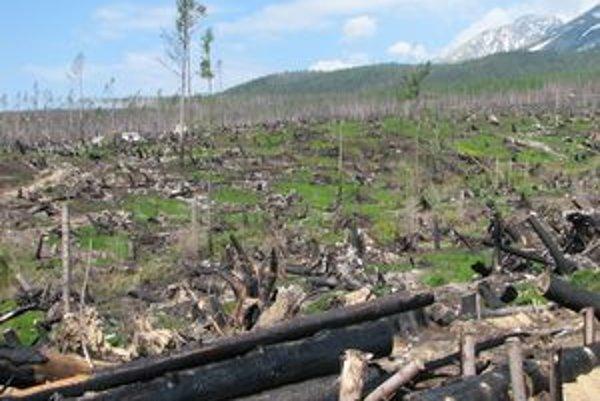 Nech to znie akokoľvek čudne, kalamitný les v Tatrách sa stal pre odborníkov unikátnou možnosťou sledovať spôsob a rýchlosť regenerácie krajiny.