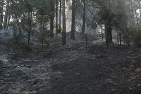 Ohňová spúšť. Horela široká plocha nad štyri hektáre. Les sa z ohňa bude dlho spamätávať.