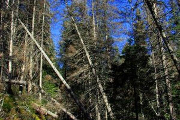 Suché padajúce stromy môžu byť pre turistov na tatranských chodníkoch nebezpečné.