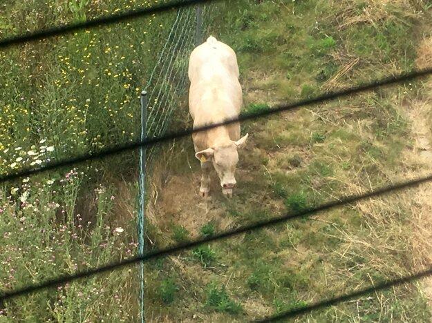 Zdá sa, že zviera neutrpelo žiadne zranenia.