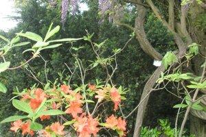 Na jednom mieste sa nachádza flóra z viacerých kontinentov.