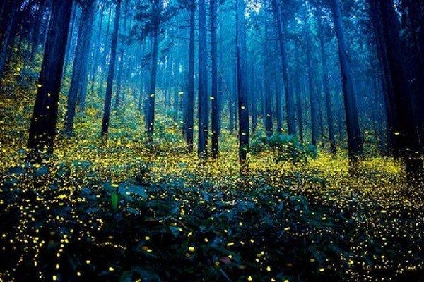 Nezvyčajná svetelná šou sa opakuje každé leto.