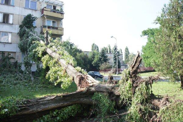 Vyvrátené stromy po silnom prívalovom daždi v Komárne